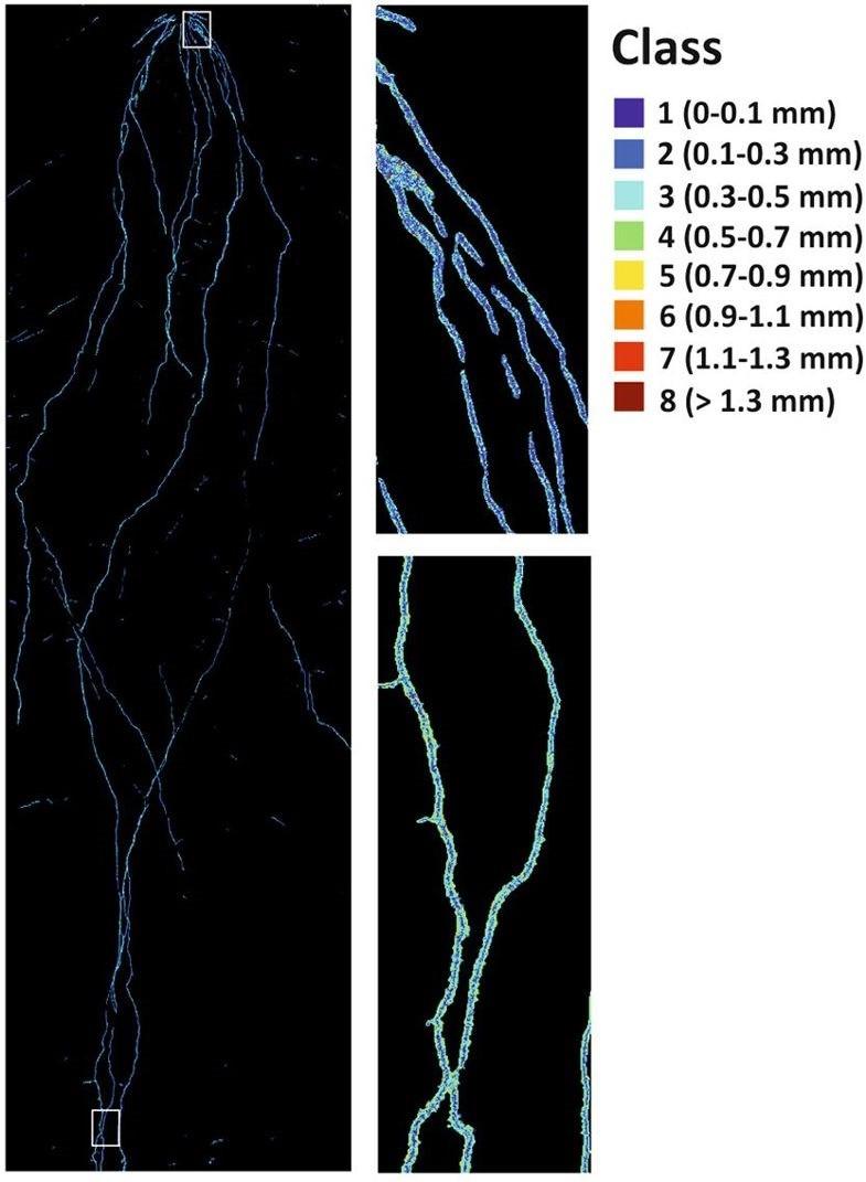 高光谱成像:植物根系表型分析的新方法