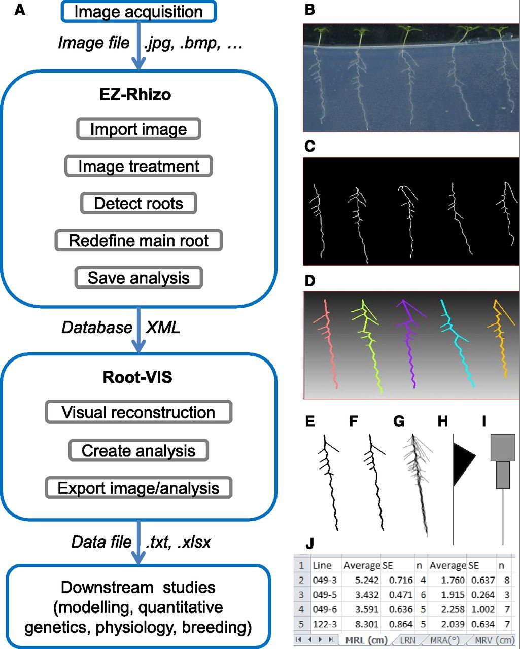 EZ-Root-VIS:用于根系结构快速分析和可视化重建的软件